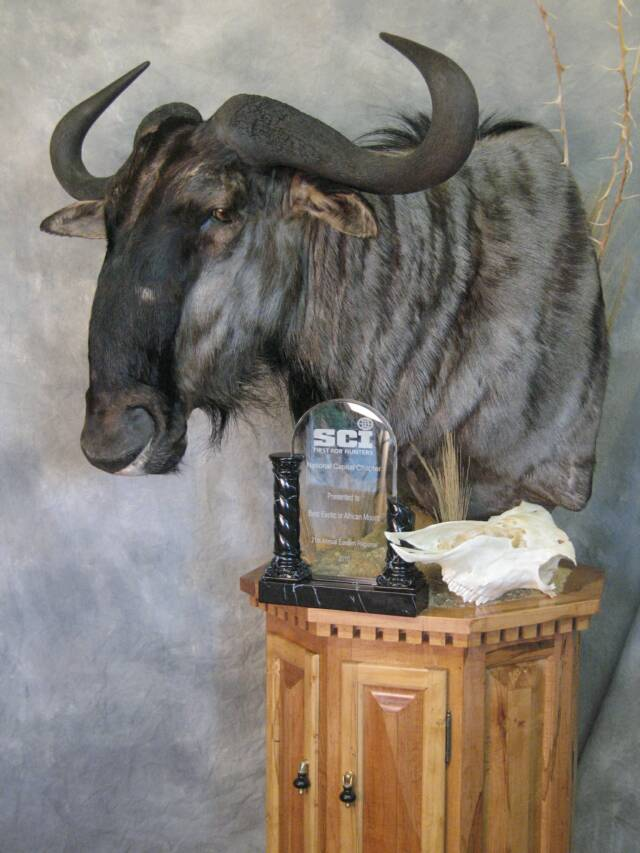 Blue Wildebeast Floor Pedestal - Winner of 1st Place Ribbon Gamehead Master Division, SCI Best African Mount - MD